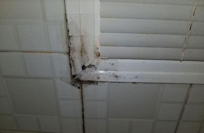 Badkamer Schimmel Verwijderen Bestrijden En Behandelen