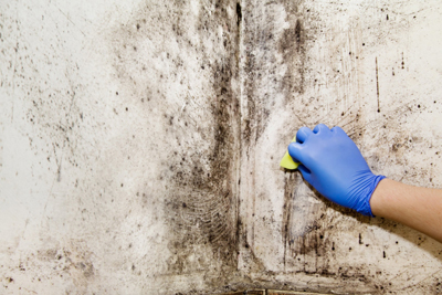 Schimmel op muur: oorzaken en hoe schimmels verwijderen en voorkomen