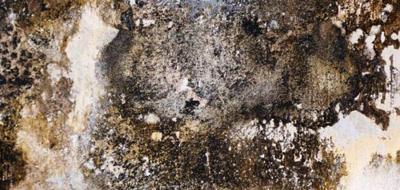 Is zwarte schimmel gevaarlijk of zelfs dodelijk?